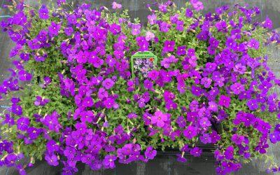Bestel uw tuinplanten online